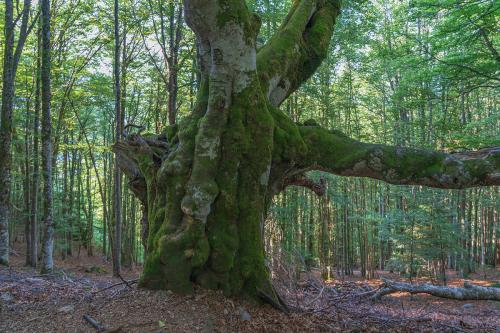 13.-Naturschutzgebiet Belchen - Belchen Bild 13