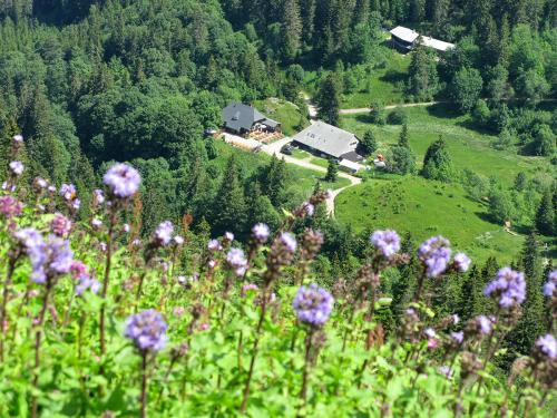 13.-Zastler HÅtte mit Alpen-Milchlattich