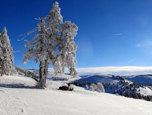 14.-Schauinsland Wintersonnentag